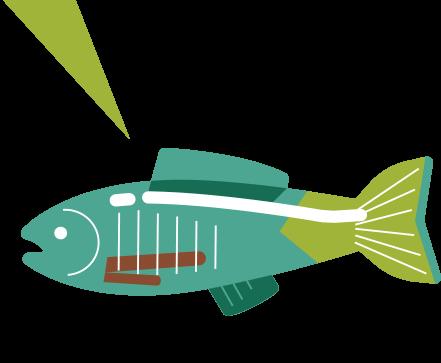 sidebar-fish